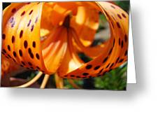Floral Abstracts Art Prints Summer Tiger Lily Baslee Troutman  Greeting Card