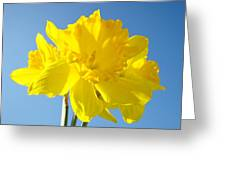 Floral Art Bright Yellow Daffodil Flowers Baslee Troutman Greeting Card