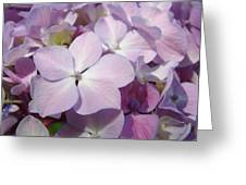 Floral Art Hydrangea Flowers Purple Lavender Baslee Troutman Greeting Card