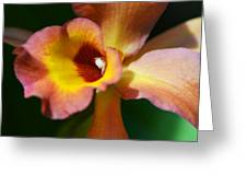 Floral Art - Intimate Orchid 3 - Sharon Cummings Greeting Card