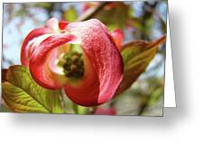 Floral Art Pink Dogwood Flowers Baslee Troutman Greeting Card