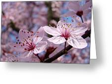 Floral Art Pink Spring Blossoms Prints Blue Sky Baslee Troutman Greeting Card