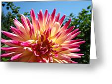 Floral Art Pink Yellow Dahlia Flower Baslee Troutman Greeting Card