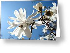 Floral Art Print Landscape Magnolia Tree Flowers White Baslee Troutman Greeting Card