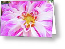 Floral Art Prints Big Pink White Dahlia Flower Baslee Troutman Greeting Card