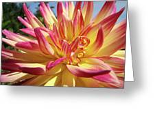 Floral Art Prints Bright Dahlia Flower Canvas Baslee Troutman  Greeting Card