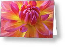 Floral Art Prints Dahlia Flower Giclee Artwork Baslee Troutman Greeting Card
