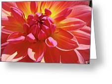 Floral Art Prints Orange Pink Dahlia Flower Baslee Troutman Greeting Card