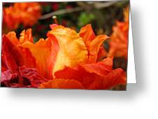 Floral Art Prints Orange Rhodies Rhododendrons Baslee Troutman Greeting Card