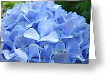 Floral Artwork Blue Hydrangea Flowers Baslee Troutman Greeting Card