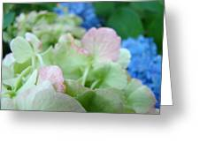 Floral Artwork Hydrangea Flowers Soft Nature Giclee Baslee Troutman Greeting Card
