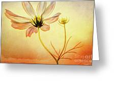 Floral At Dusk Greeting Card