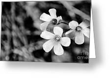 Floral Black And White Greeting Card