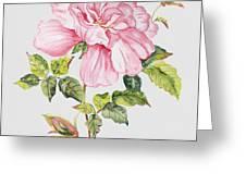 Floral Botanicals-jp3779 Greeting Card