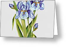 Floral Botanicals-jp3786 Greeting Card