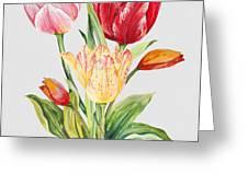 Floral Botanicals-jp3788 Greeting Card