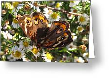 Floral Buckeye Greeting Card