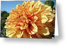 Floral Dahlia Flower Art Print Orange Red Dahlias Baslee Greeting Card