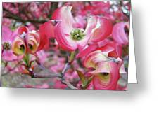 Floral Dogwood Tree Flowers Baslee Troutman Greeting Card
