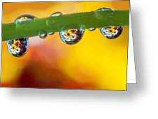 Floral Drop Trio  8054 Greeting Card