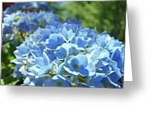 Floral Fine Art Blue Hydrangeas Baslee Troutman Greeting Card