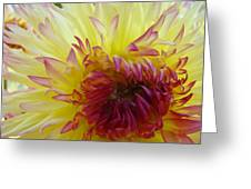 Floral Fine Art Dahlia Flower Yellow Red Prints Baslee Troutman Greeting Card
