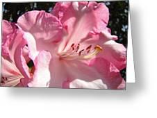 Floral Fine Art Prints Pink Rhodie Flower Baslee Troutman Greeting Card