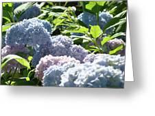 Floral Garden Art Prints Blud Hydrangea Flowers Greeting Card