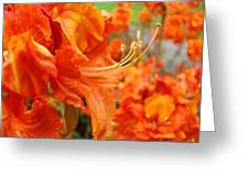 Floral Garden Art Prints Orange Rhododendrons Baslee Troutman Greeting Card