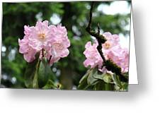 Floral Garden Pink Rhododendron Flowers Baslee Troutman Greeting Card