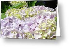 Floral Hydrangea Flowers Art Prints Lavender Baslee Troutman Greeting Card