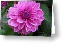 Floral In Pink Greeting Card