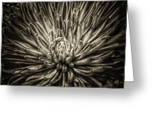 Floral In Sepia 1 Greeting Card