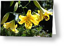 Floral Lilies Art Yellow Lily Flowers Giclee Baslee Troutman Greeting Card