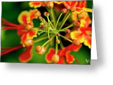 Floral Macro Greeting Card