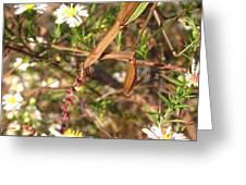 Floral Mantis Greeting Card