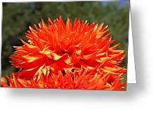 Floral Orange Dahlia Flowers Art Prints Greeting Card
