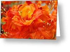 Floral Rhodies Art Prints Orange Rhododendrons Canvas Art Baslee Troutman Greeting Card