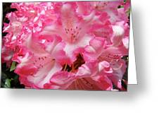 Floral Rhodies Flowers Pink White Art Baslee Troutman Greeting Card