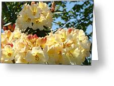 Floral Rhododendrons Fine Art Photography Art Prints Baslee Troutman Greeting Card