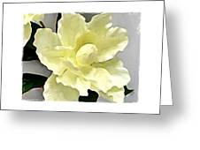 Floral Series I Greeting Card