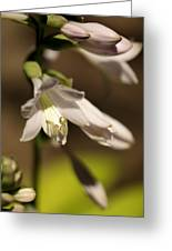 Floral Sideview Greeting Card
