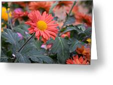 Floral Smiles Greeting Card