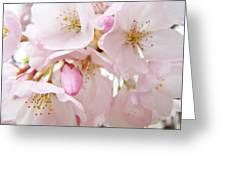 Floral Soft Pink Blossoms Spring Art Baslee Troutman Greeting Card