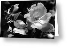 Floral Spotlight  Greeting Card