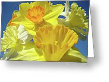 Floral Spring Garden Art Prints Yellow Daffodils Flowers Baslee Troutman Greeting Card