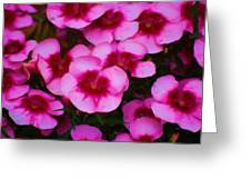 Floral Study In Red And Pink Greeting Card