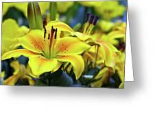 Floral Sunshine Greeting Card