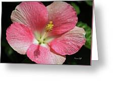 Floral Symphony In Pink Greeting Card