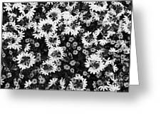 Floral Texture In Black And White Greeting Card
